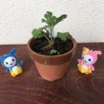 菊づくり教室